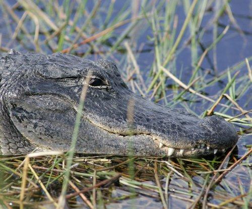 $18,900 alligator handbag destroyed over $50 import permit