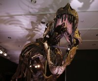 T. rex had big growth spurts, but other theropods matured more steadily