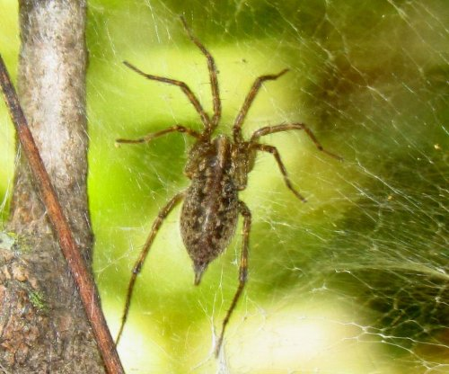 Seattle man sets house ablaze trying to kill spider with lighter and can of spray paint