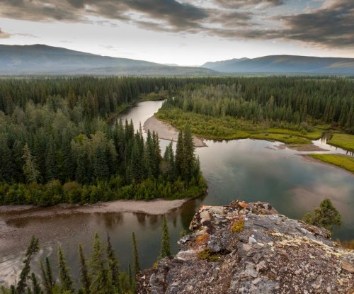Boreal forests threatened by climate change