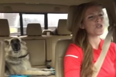 Dog sings along to 'We Are The Champions' on road trip