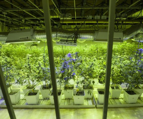 Feds approve marijuana imports from Canada for medical research