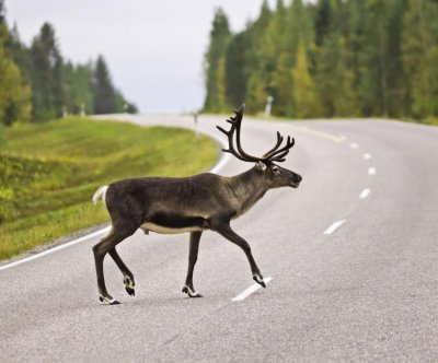 Canadian parkway proves deadly for at-risk species