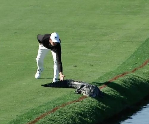 Golfer Cody Gribble slaps sunbathing alligator on the tail