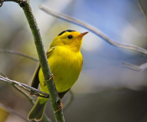 Birdsong works like a mood booster for humans