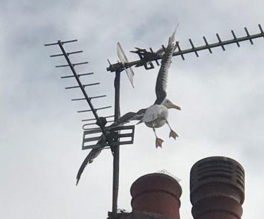 Firefighters rescue seagull impaled on rooftop TV antenna