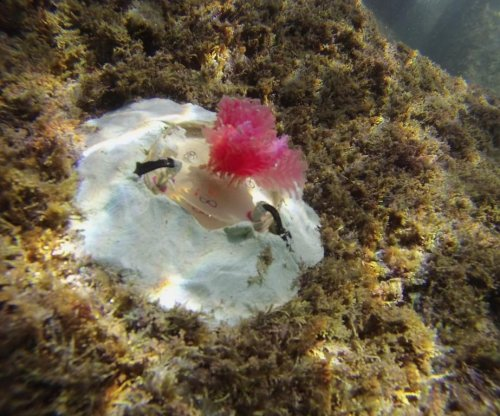 Scientists hope artificial reef can protect ocean biodiversity from climate change