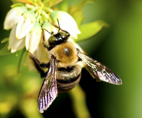 More frequent droughts mean fewer flowers for bees