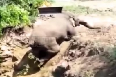 Elephant rescued from 10-foot-deep well in India