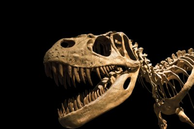 Statistical analysis reveals differences between dinosaur sexes