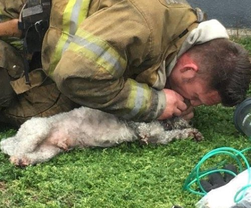 C-P-Arf: Firefighter uses mouth-to-snout to bring dog 'back from the dead'