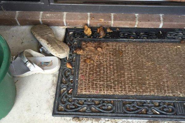 Look Dog Droppings Thrown Onto Porch In Poop Dispute