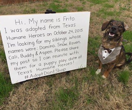 Adopted Texas puppy's owner uses social media to orchestrate family reunion