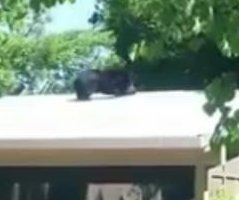 Black bear briefly escapes Columbus Zoo enclosure