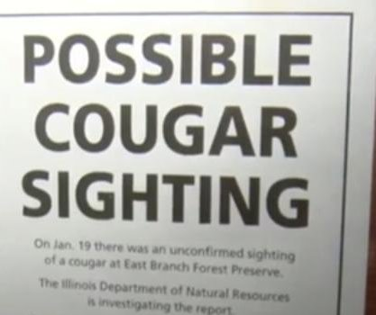 Officials warn of possible cougar in Chicago area