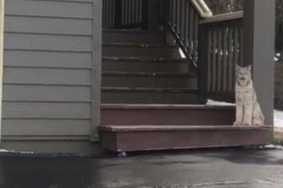 Alaska woman comes home to find lynx blocking door