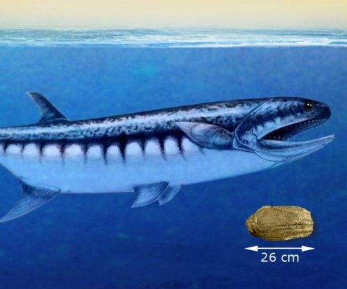 Large-mouthed fish dominated the seas following mass extinction