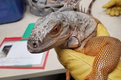 Police rescue iguana from tree in New Mexico
