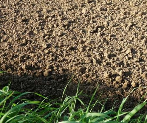 Scientists uncover two-layer identification among soil bacteria