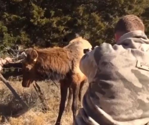 Oklahoma game warden uses marksmanship to rescue elk