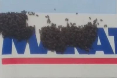 Displaced bees swarm pump at Michigan gas station