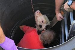 Firefighters rescue calf from 20-foot well in Massachusetts