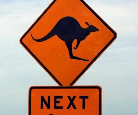 Wisconsin police on the lookout for highway-hopping kangaroo
