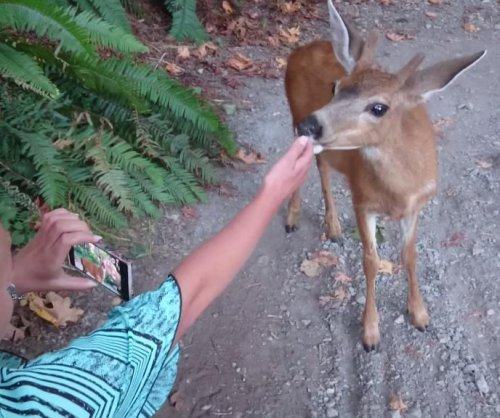 'Downtown Deer' petting video concerns city officials