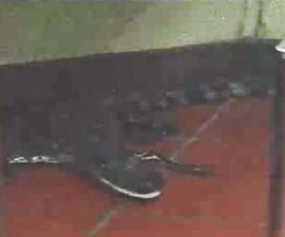 Florida man accused of throwing alligator into Wendy's drive-through window