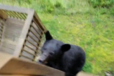 Bear scales Tennessee resident's balcony to steal snack