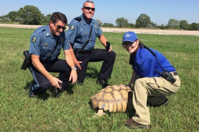 Escaped tortoise found a mile and a half away from home