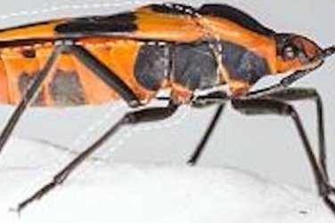 Scientists explain how insects got their wings