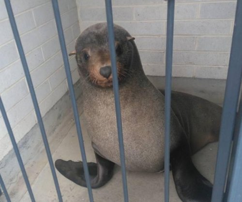 Seal found sleeping in cemetery bathroom