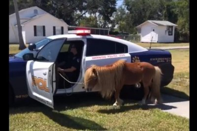 Florida police capture pony running loose on the highway