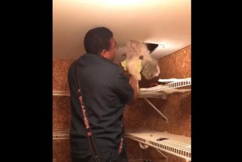 Firefighters cut through ceiling to rescue dog from heating duct