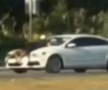 Florida man clings to hood of speeding car in road rage incident