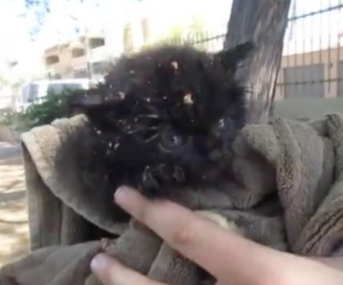 Kitten rescued after being trapped in manhole for three days
