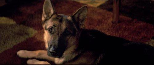 'A Dog's Purpose' premiere canceled amid animal cruelty controversy