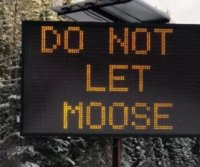 Canadian town posts signs reading: 'Do not let moose lick your car'