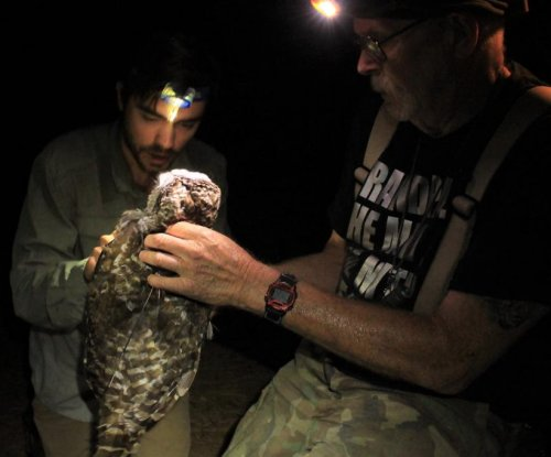 Scientists recommend removing barred owls from Sierra Nevada to protect them
