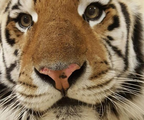 LSU's live tiger mascot diagnosed with rare cancer