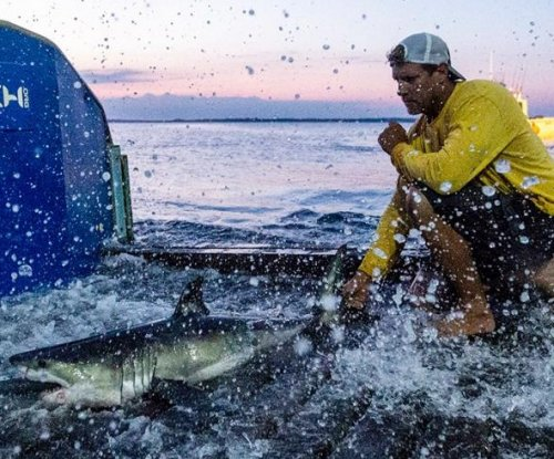 Researchers capture and tag baby great white shark off New York