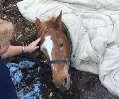 Horse hoisted from muck-filled pond in Florida