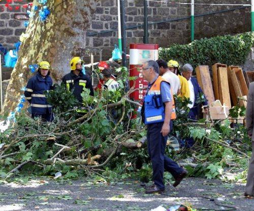 Falling tree kills 11 at Portuguese religious ceremony