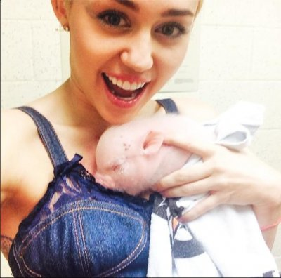 Miley Cyrus adopts pet piglet Bubba Sue