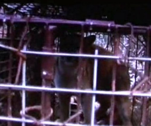 Mountain lion ensnared in South Dakota fox trap
