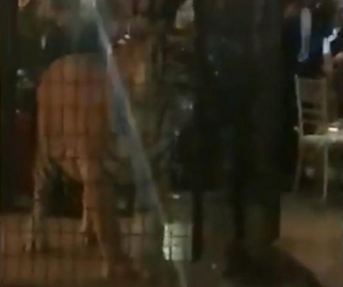 Florida school apologizes for bringing live tiger to prom