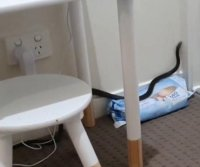 Venomous snake captured in small child's bedroom