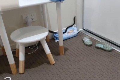 Venomous snake captured in small child's bedroom