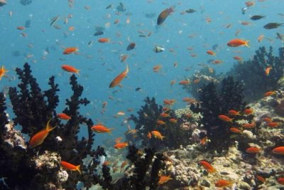 Coral reef predators get 70% of their energy from the open ocean